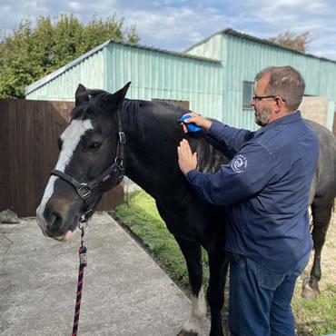 de Boer & Taylor Vets - The Team